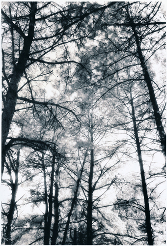 Infrared Treees