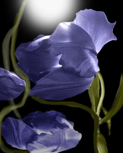 Purple Satin  by Ileana Collazo