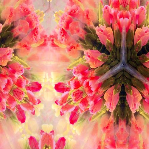 Veiled Tulips by Ileana Collazo