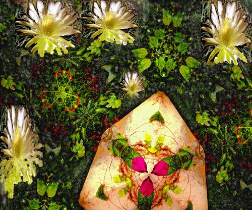 Moth Covered Path by Ileana Collazo