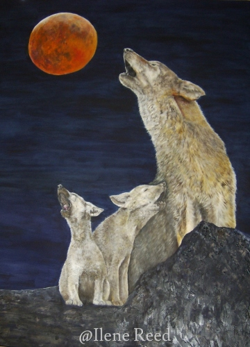 Super Blood Wolf Moon Serenade