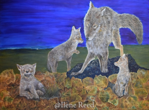 Coyote Family Outing by ilene reed