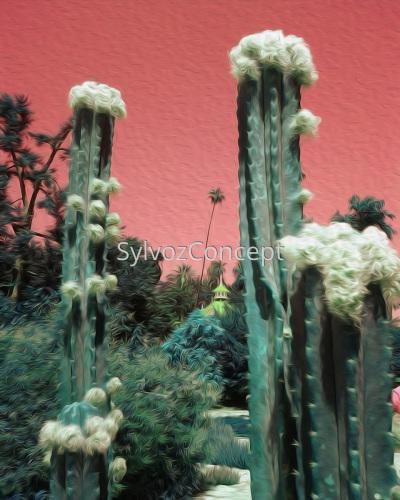 """""""San Pedro Cactus"""""""