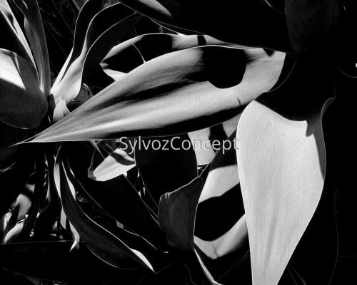"""""""Black & White Agave"""""""