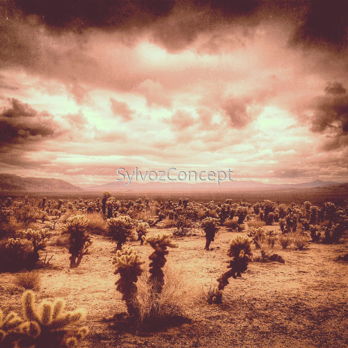 """Joshua Tree 2"" by SylvozConcept"