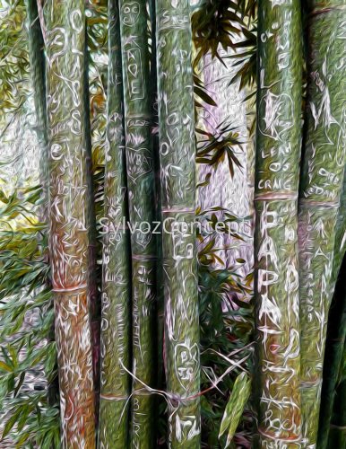 """Bamboo"""