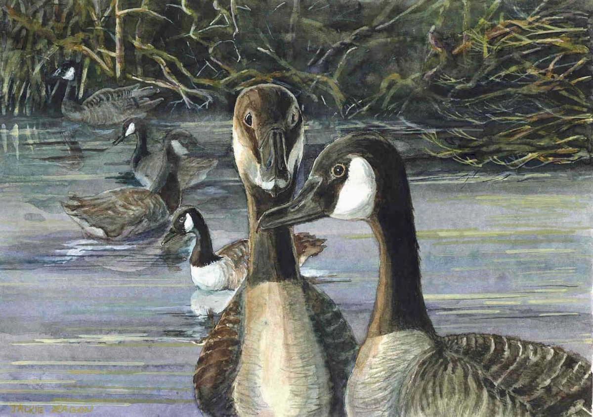 Jackie Zagon, Watercolor, realistic style,depicts male goose romancing a female while other geese look on. Set in a winter lake setting. Colors: blues, greens & earthtones. Frame: thin gold, metal. Mat: double white. (large view)