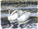 Jackie Zagon, Pen & Ink and Tombow Marker, in watercolor technique. Pair of Mute Swans in winter lake setting, small work (thumbnail)