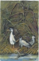 Jackie Zagon, Watercolor. In a winter, lakeside setting, we see three Black Crowned Night Herons standing on the shoreline. There is a Mallard in the wter beneath them. Colors: neutrals, whites, yellows, blues & greens. Frame: thin gold metal. Mat: doubl (thumbnail)