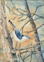 Jackie Zagon, Watercolor, Realistic. The winter sun is setting on a close up woodland scene: through the bare branches a nuthatch is walking sideways down the trunk of a tree. Colors: siennas, oranges, blues, neutrals. Frame: thin gold metal. Mat: white (thumbnail)