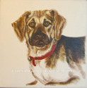 dog portrait, pet portrait, acrylic on ceramic tile, commission done from photo supplied by dog owner. (thumbnail)