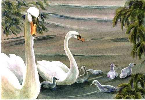 Jackie Zagon, Watercolor, realistic, romantic, male mute swan proudly presents his mate & cygnets (babies) in a springtime, lake front setting. Colors, white, neutrals,orange,  greens. Frame: thin gold metal. Mat: double, white. (large view)