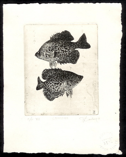 Crappies (large view)