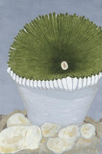 A Green Zoanthid