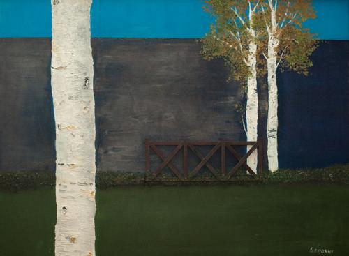 Birch trees 3