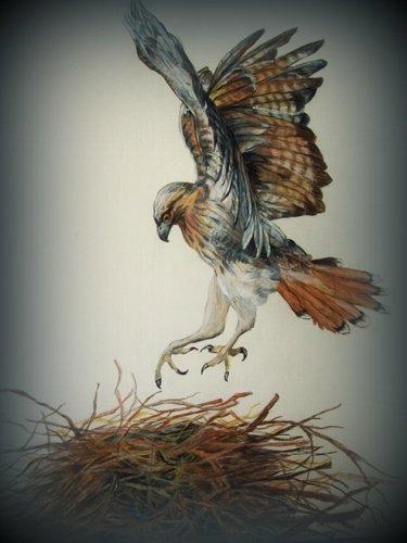 ospray on nest by Jane Studio