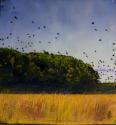 Bay Birds Encaustic Wax Photograph 12x12 (thumbnail)