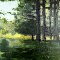 Tree Wildes Rd (thumbnail)