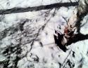 Winter Birch (thumbnail)
