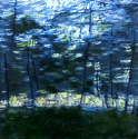 Seeing Motion Tree's (thumbnail)