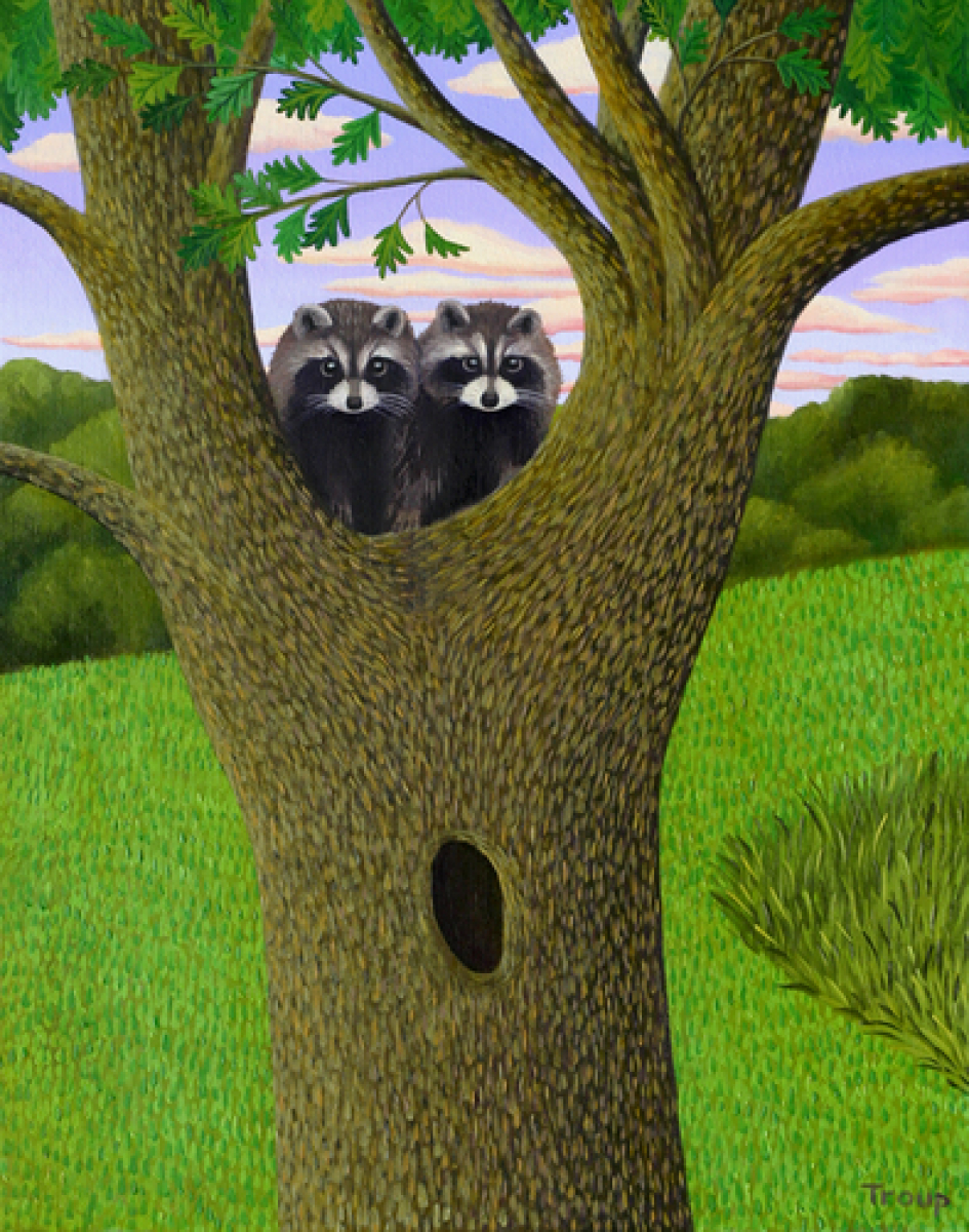 RACCOONS (large view)