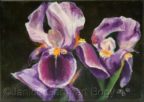 Pretty In Purple II