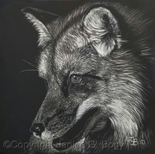Red Fox Study I