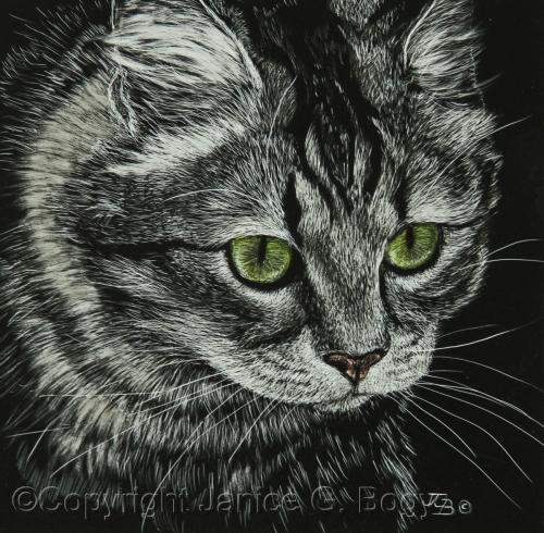 Tabby Cat Study