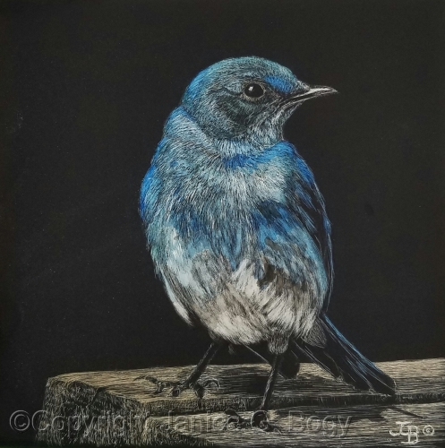 Mountain Blue Bird Study I