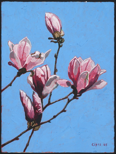 Magnolia Solebury (large view)