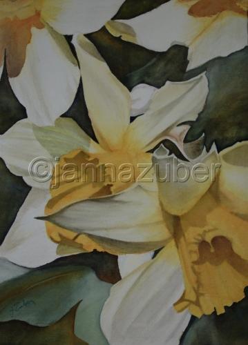 Daffodils Jubilant