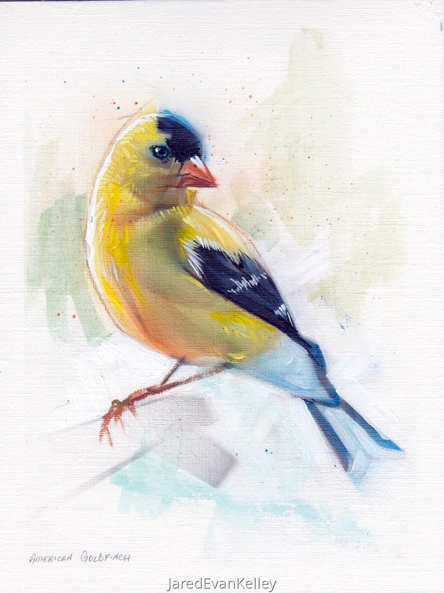 American GoldFinch (large view)