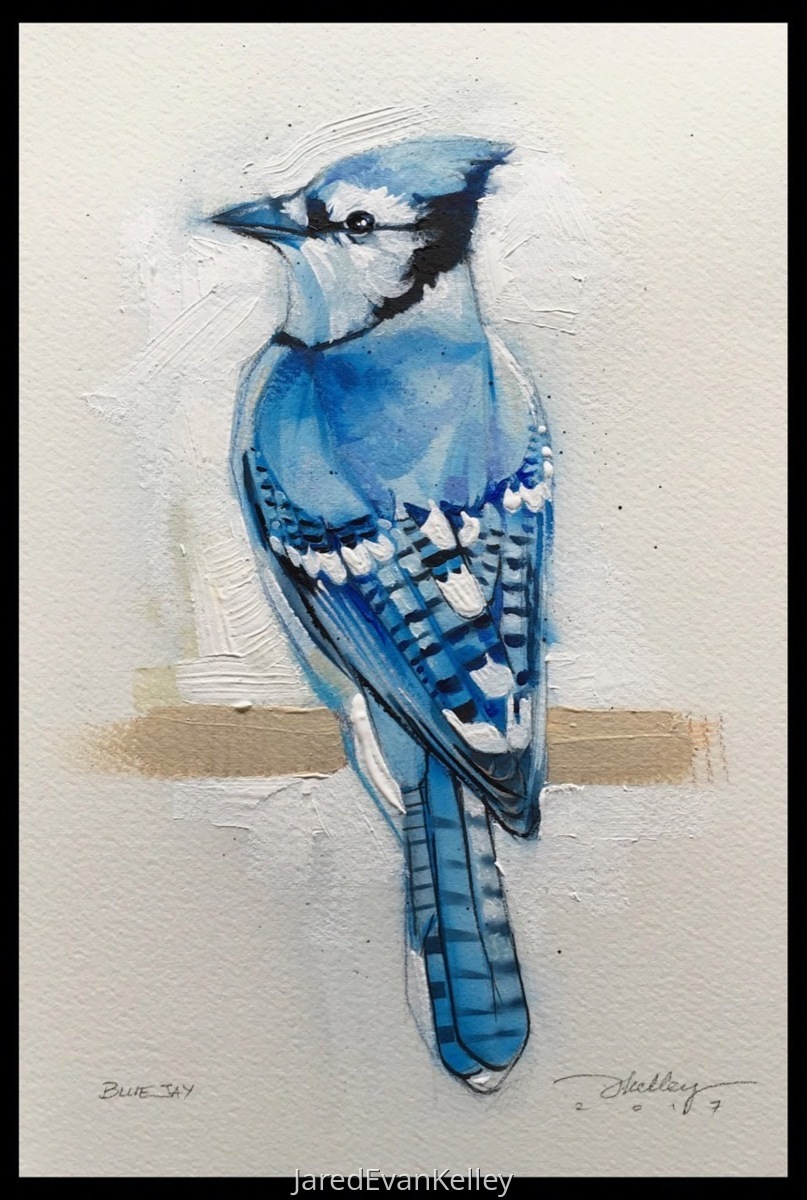 Bluejay (large view)