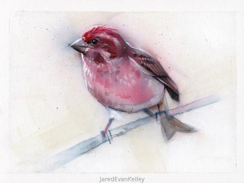 Purple Finch by Jared Kelley