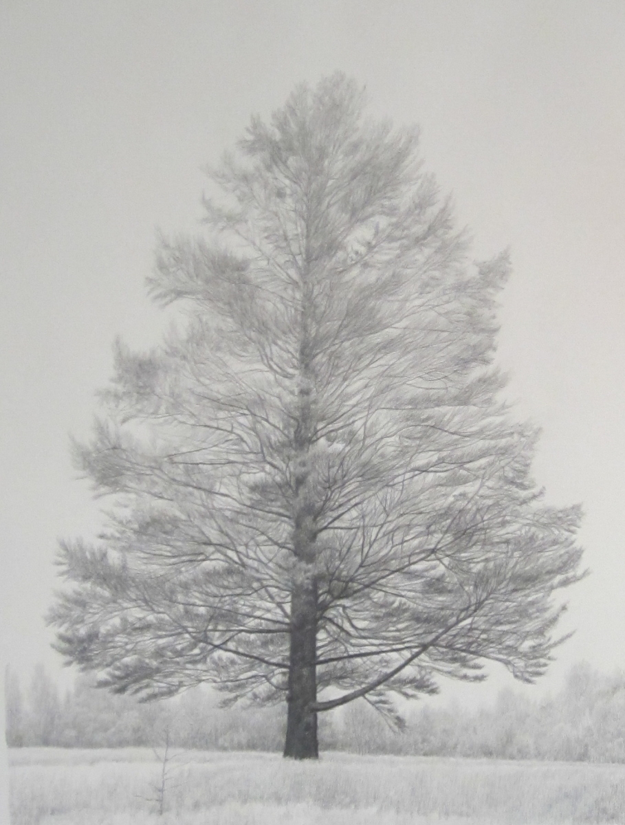 Larch (large view)