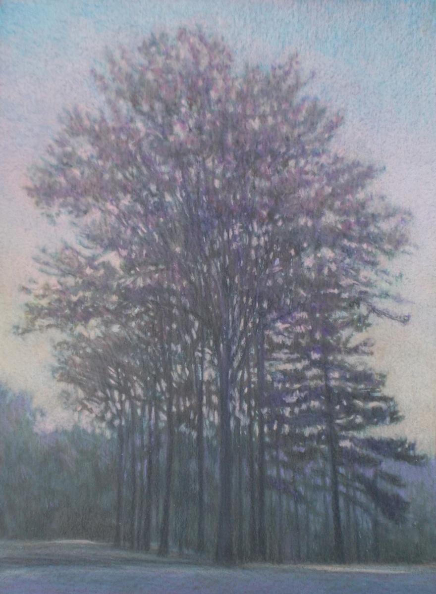 Ridge Trees (large view)