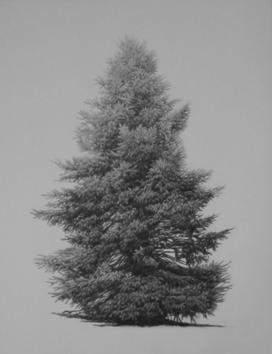 Evergreen 3