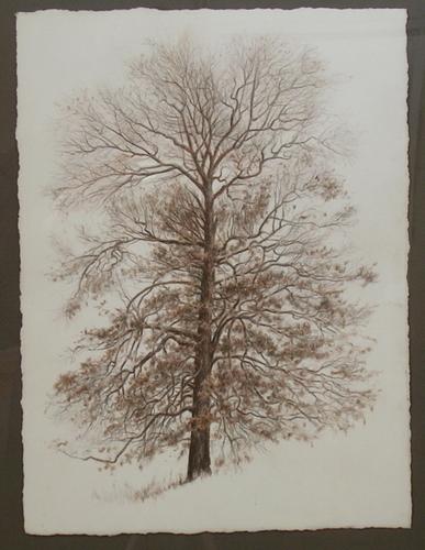 Field Oak (large view)