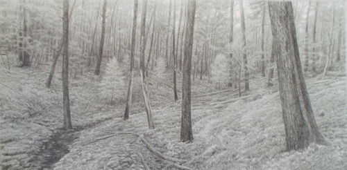Forest Interior with Small Spring