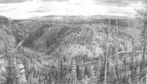 Lewis Canyon, Yellowstone - 20 years After Fire