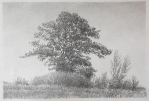 Skyline Oak (large view)