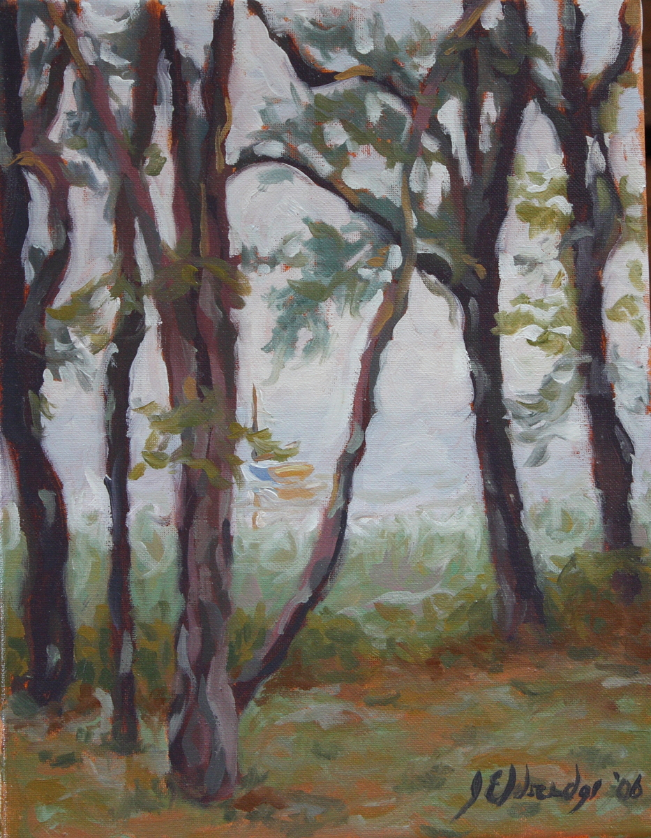 Fog Through Pines 2 (large view)