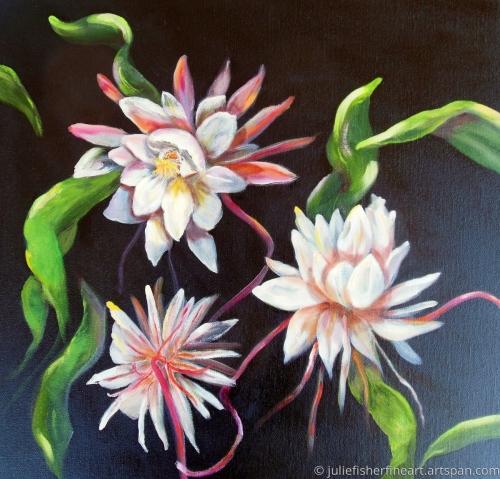 Night Blooming Cereus 2