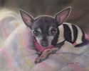 Painting--Pastels-AnimalsGracie
