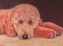 Painting--Pastels-AnimalsBaxter