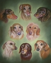 Kerry's Doxie Family (thumbnail)