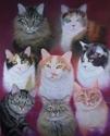 Mullin's Feline Family (thumbnail)