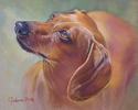 Painting--Pastels-AnimalsRed Doxie