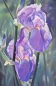 The Color Purple (thumbnail)