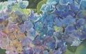 Hydra Blue (thumbnail)